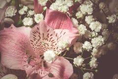Rosa peruanische Lily Macro Stockfoto