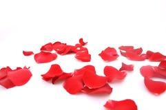 Rosa-petali su una priorità bassa bianca Fotografia Stock Libera da Diritti