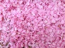 Rosa petals fotografering för bildbyråer