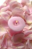 Rosa petals Arkivbilder