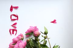Rosa Pfingstrosen der Blumen auf einem weißen Hintergrund und Blumenblätter lieben, fassen Liebe machten von den Blumenblättern a stockfotos
