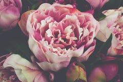 Rosa Pfingstrosen-Rose Flower Vintage-Nahaufnahme Lizenzfreie Stockfotografie