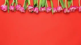 Rosa Pfingstrosen-Tulpen auf Coral Red Background stockbild
