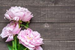 Rosa Pfingstrosenblumen auf dunklem hölzernem Hintergrund Lizenzfreie Stockfotos