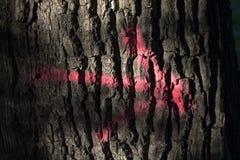 Rosa pil på en trädstam arkivbild