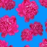 Rosa pion Sömlös pattern2 Royaltyfri Foto