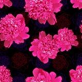 Rosa pion Sömlös pattern4 Royaltyfri Bild