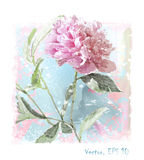 rosa pionblomma för vattenfärg vektor illustrationer