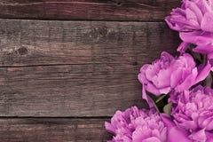 Rosa pionblomma på mörk lantlig träbakgrund med kopieringsbrunnsorten Royaltyfri Foto