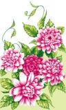 Rosa pionblommor royaltyfri fotografi