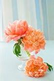 Rosa pioner Arkivbild