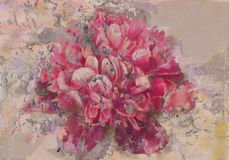 Rosa pionfreskomålning Royaltyfri Fotografi