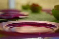 Rosa platta Royaltyfria Foton