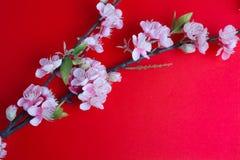 Rosa plommonblomning på rött Fotografering för Bildbyråer