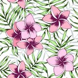 Rosa Plumeria und nahtloses Muster der Palmblätter lizenzfreie abbildung