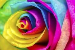 Rosa poética Foto de Stock Royalty Free