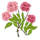 Rosa pungente fotografie stock libere da diritti