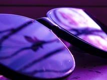 Rosa purpurfärgad slylish solglasögon och härligt royaltyfri bild