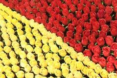 ROSA QUADRATA Fotografie Stock