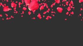 Rosa que cai com backgrouund preto video estoque