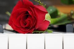 Rosa que encontra-se no piano, romance Foto de Stock Royalty Free