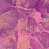 Rosa röda stora pionkronblad ovanf?r sikt abstrakt bakgrund royaltyfri fotografi