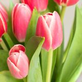 Rosa, ramalhete das rosas vermelhas com Fundo branco imagens de stock royalty free