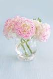 rosa ranunculus för blommor Arkivfoton
