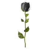 Rosa realista del negro EPS 10 Imagen de archivo