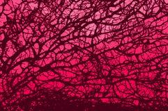 rosa retro för filial Royaltyfri Fotografi