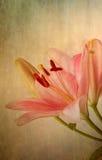 rosa retro stiltappning för liljar royaltyfri illustrationer