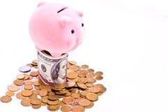 rosa rich för pig Fotografering för Bildbyråer