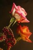 Rosa riflettente Fotografia Stock