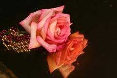 Rosa riflettente immagini stock libere da diritti