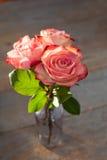 Rosa ro Arkivbilder