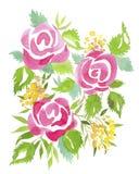 rosa ro vektor illustrationer