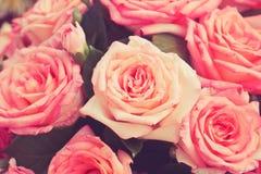 rosa ro Arkivfoto