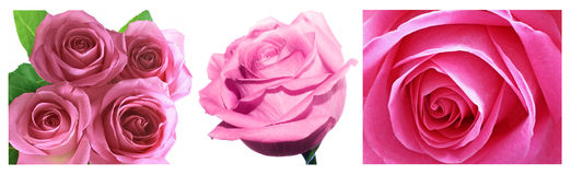 rosa ro för collage Arkivfoto