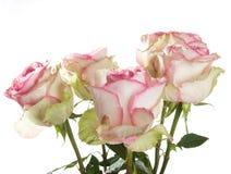 rosa ro för grupp Royaltyfri Fotografi