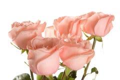 rosa ro för grupp Royaltyfri Foto