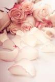 rosa ro för petals Royaltyfria Foton