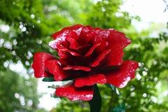 Rosa roja de Lancaster con el fondo borroso imagen de archivo libre de regalías
