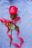 Rosa roja en el fondo azul de la mezclilla para Valentine' concepto del fondo de s fotografía de archivo libre de regalías