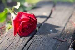Rosa roja para la persona especial imagen de archivo