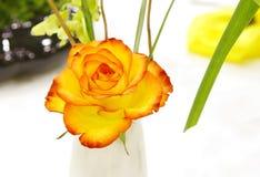 Rosa rojiza hermosa del amarillo Imagen de archivo libre de regalías