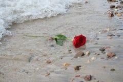 Rosa romântica Imagem de Stock Royalty Free