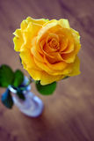 Rosa romântica amarela no vaso cerâmico branco Fotos de Stock