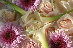 rosa romansk white Arkivfoton