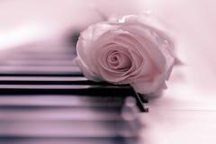 Rosa ros och piano, mjuk rosa bakgrund royaltyfri fotografi