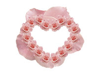 Rosa rosa färger Royaltyfri Bild